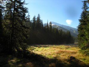 widok na tatrzańską polanę latem