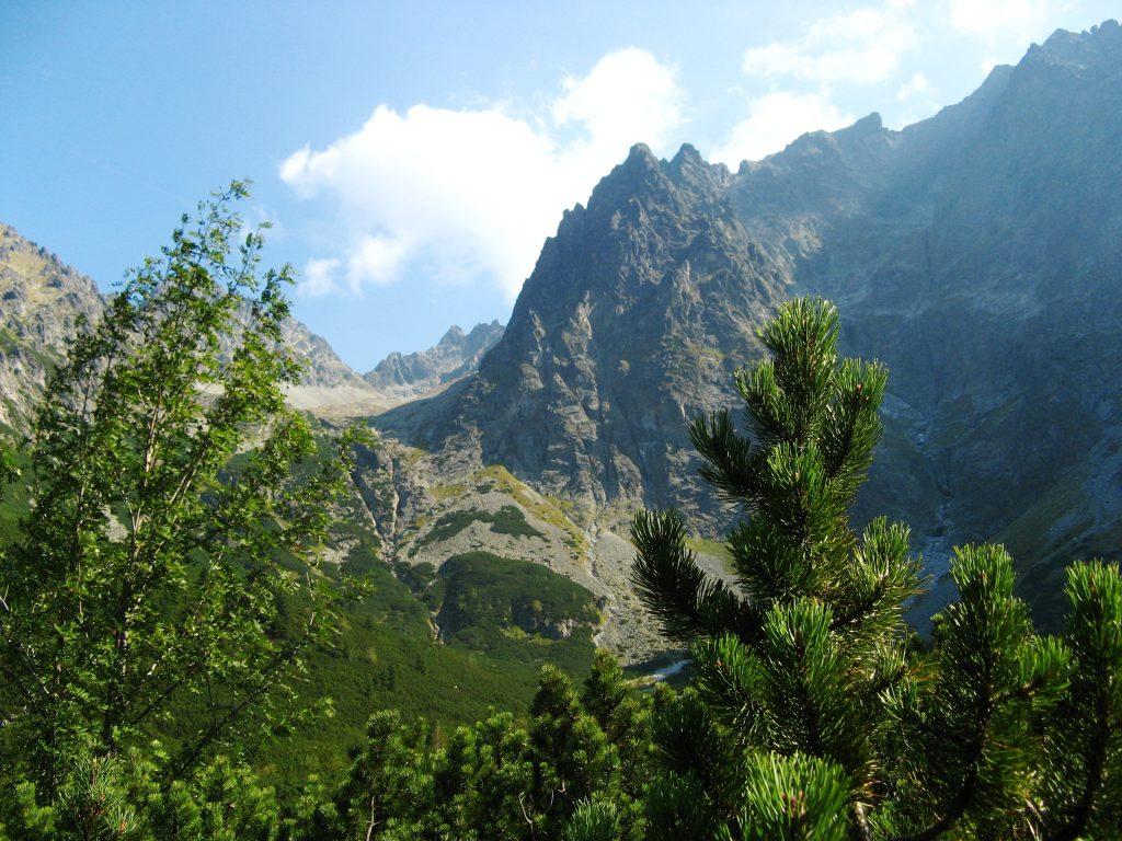 widok przez las na Lodowy Szczyt