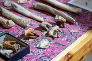 kości niedźwiedza uznanego za prehistoryczny