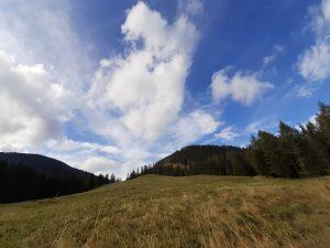 widok na tatrzańską polanę i las