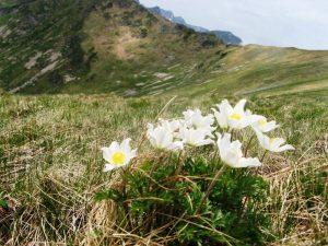 widok na tatrzańskie kwiaty