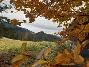 jesienne barwy liści w dolinie Lejowej