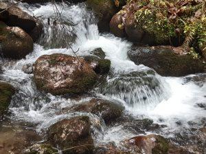 potok górski w dolinie Lejowej