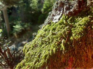 roślinność w dolinie Lejowej