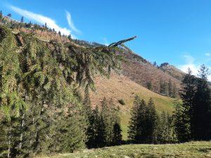 dolina Lejowa - roślinność latem