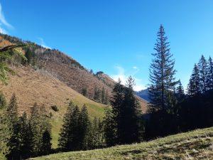 pojedyncze drzewa i polana tatrzańska