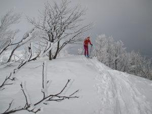 narciarz na śniegu na trasie biegowej