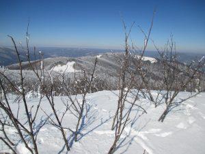 bezlistne drzewa wystające ponad pokrywę śniegu