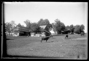 Zdjęcie T. Malicki, Archiwum Muzeum Tatrzańskiego Zdjęcie przedstawia zabudowania osiedla góralskiego. Widać kobietę przed domem i pasące się krowy.