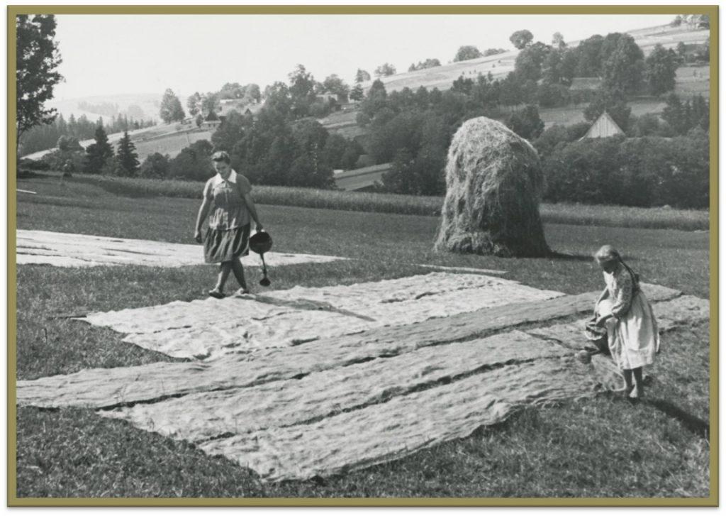 Zdjęcie przedstawia proces bielenia płótna. Kobieta z dziewczynką polewają wodą lniane płótno rozłożone na łące. Pod wpływem promieni słonecznych płótno lniane stawało się jaśniejsze i mniej szorstkie.