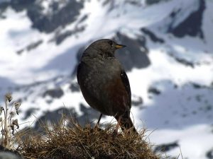 ptak na tle Tatr